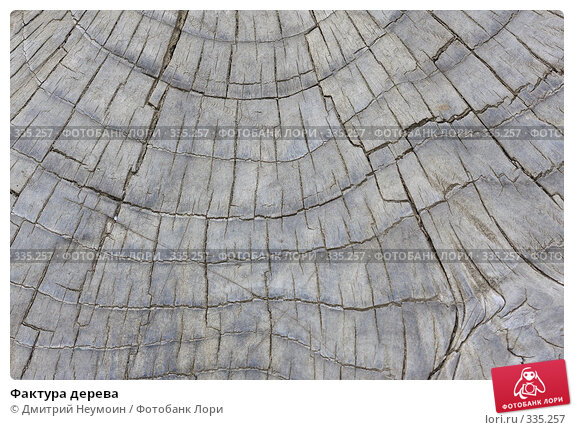 Купить «Фактура дерева», эксклюзивное фото № 335257, снято 24 апреля 2008 г. (c) Дмитрий Нейман / Фотобанк Лори