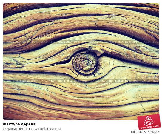 Фактура дерева. Стоковое фото, фотограф Дарья Петрова / Фотобанк Лори