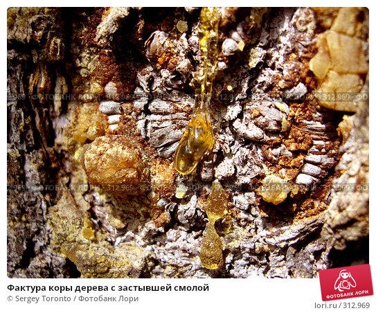 Купить «Фактура коры дерева с застывшей смолой», фото № 312969, снято 11 июня 2007 г. (c) Sergey Toronto / Фотобанк Лори