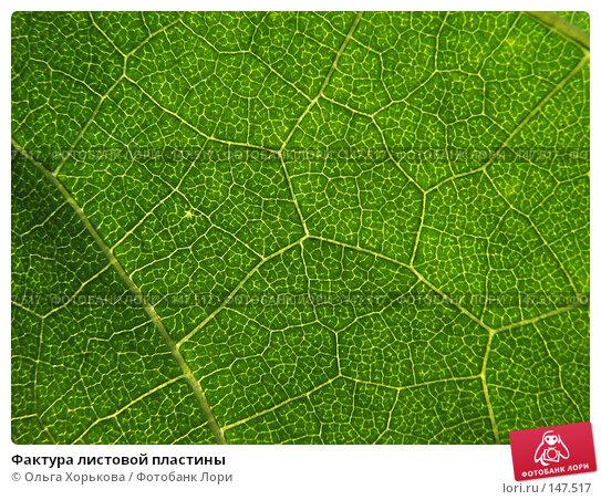 Фактура листовой пластины, фото № 147517, снято 13 августа 2007 г. (c) Ольга Хорькова / Фотобанк Лори