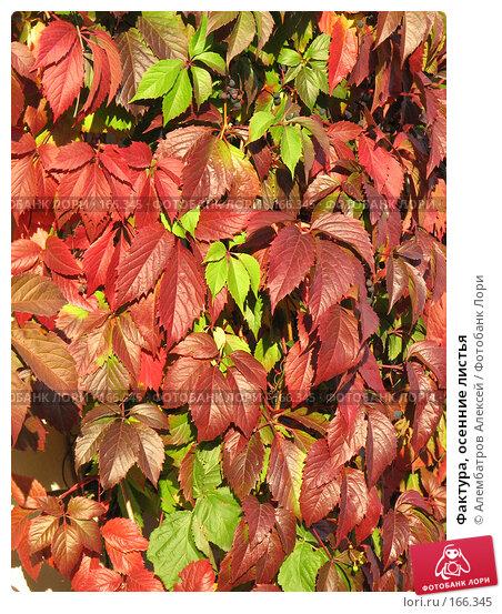 Фактура, осенние листья, фото № 166345, снято 22 сентября 2007 г. (c) Алембатров Алексей / Фотобанк Лори