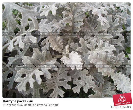 Купить «Фактура растения», фото № 144693, снято 11 декабря 2017 г. (c) Стекляренко Марина / Фотобанк Лори