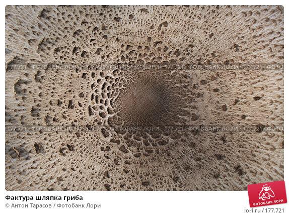 Фактура шляпка гриба, фото № 177721, снято 24 февраля 2017 г. (c) Антон Тарасов / Фотобанк Лори
