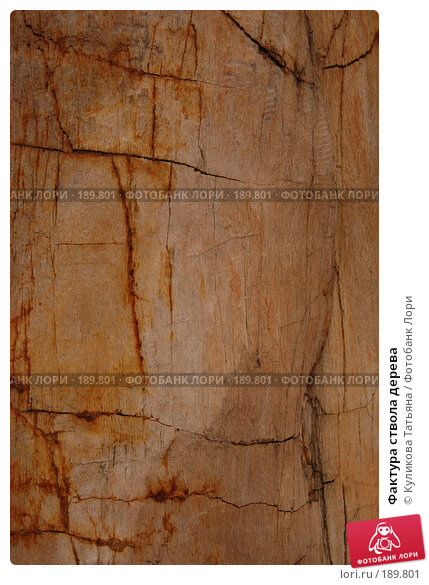 Купить «Фактура ствола дерева», фото № 189801, снято 14 декабря 2017 г. (c) Куликова Татьяна / Фотобанк Лори