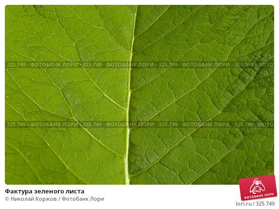 Фактура зеленого листа, фото № 325749, снято 14 июня 2008 г. (c) Николай Коржов / Фотобанк Лори