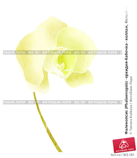 Фаленопсис (Phalaenopsis) - орхидея-бабочка - коллаж, белый фон, иллюстрация № 303181 (c) Tamara Kulikova / Фотобанк Лори