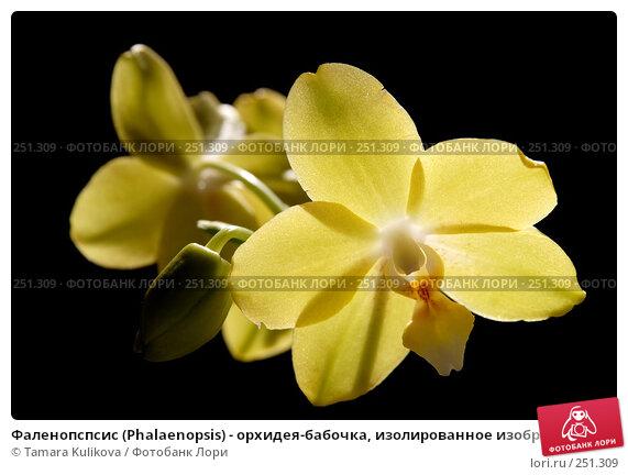 Фаленопспсис (Phalaenopsis) - орхидея-бабочка, изолированное изображение, фото № 251309, снято 14 апреля 2008 г. (c) Tamara Kulikova / Фотобанк Лори