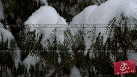 Купить «Falling snow, slow motion», видеоролик № 28164217, снято 2 марта 2018 г. (c) Игорь Жоров / Фотобанк Лори