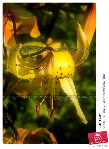 Фантазия, фото № 30185, снято 5 августа 2006 г. (c) Харитонова Ольга / Фотобанк Лори