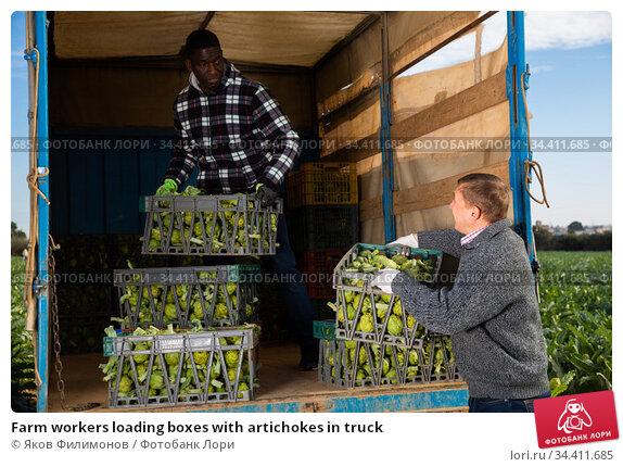 Farm workers loading boxes with artichokes in truck. Стоковое фото, фотограф Яков Филимонов / Фотобанк Лори