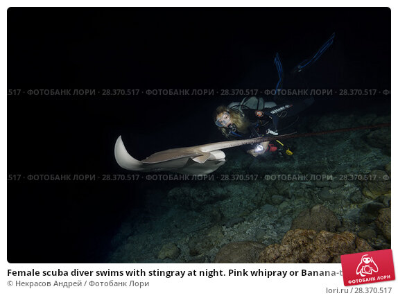 Купить «Female scuba diver swims with stingray at night. Pink whipray or Banana-tail ray (Himantura fai)», фото № 28370517, снято 30 марта 2018 г. (c) Некрасов Андрей / Фотобанк Лори