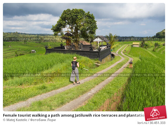 Female tourist walking a path among Jatiluwih rice terraces and plantation in Bali, Indonesia. Стоковое фото, фотограф Matej Kastelic / Фотобанк Лори