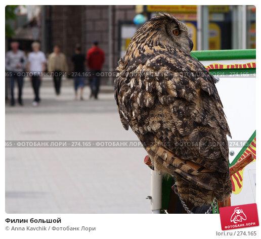 Филин большой, фото № 274165, снято 1 мая 2008 г. (c) Anna Kavchik / Фотобанк Лори