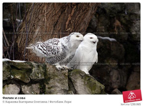 Купить «Филин и сова», фото № 230065, снято 10 февраля 2008 г. (c) Карасева Екатерина Олеговна / Фотобанк Лори