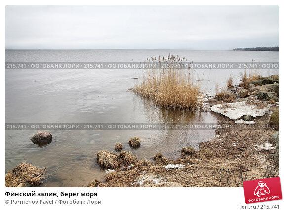 Финский залив, берег моря, фото № 215741, снято 13 февраля 2008 г. (c) Parmenov Pavel / Фотобанк Лори