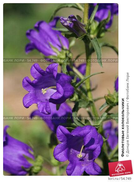 Фиолетовые колокольчики, фото № 54749, снято 14 июня 2007 г. (c) Донцов Евгений Викторович / Фотобанк Лори