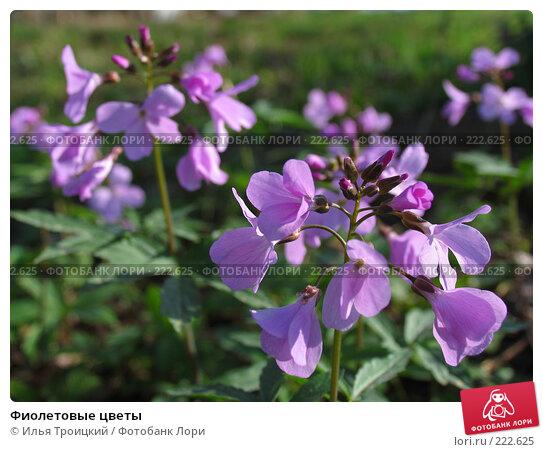 Фиолетовые цветы, фото № 222625, снято 11 апреля 2006 г. (c) Илья Троицкий / Фотобанк Лори