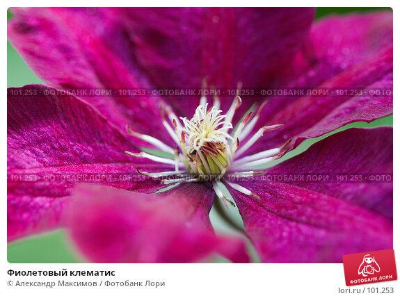 Купить «Фиолетовый клематис», фото № 101253, снято 23 сентября 2006 г. (c) Александр Максимов / Фотобанк Лори