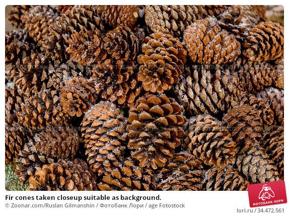 Fir cones taken closeup suitable as background. Стоковое фото, фотограф Zoonar.com/Ruslan Gilmanshin / age Fotostock / Фотобанк Лори