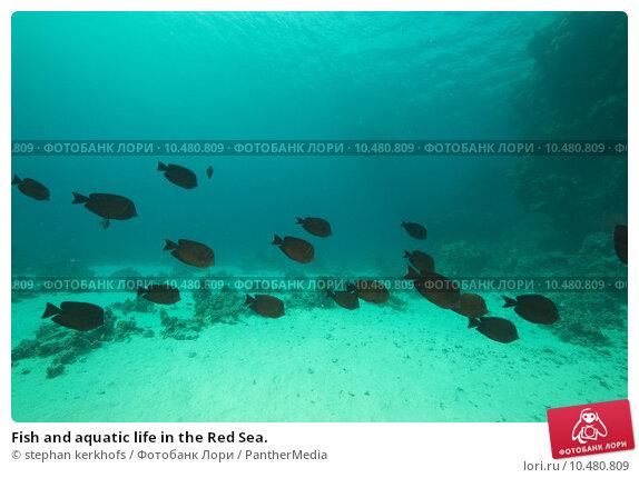 Fish life in sea essay