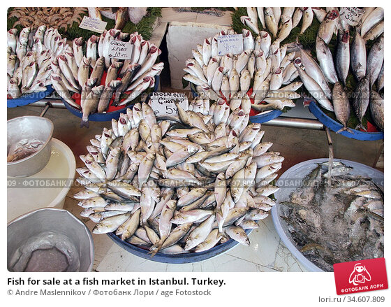 Fish for sale at a fish market in Istanbul. Turkey. Стоковое фото, фотограф Andre Maslennikov / age Fotostock / Фотобанк Лори