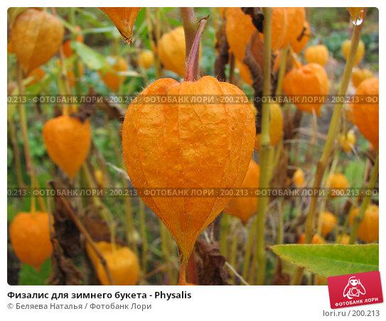 Физалис для зимнего букета - Physalis, фото № 200213, снято 30 сентября 2007 г. (c) Беляева Наталья / Фотобанк Лори