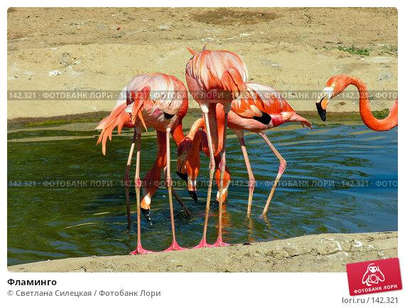 Фламинго, фото № 142321, снято 3 июня 2007 г. (c) Светлана Силецкая / Фотобанк Лори
