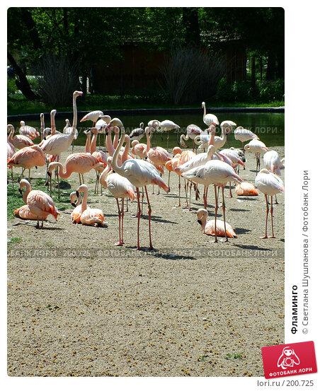 Фламинго, фото № 200725, снято 9 мая 2006 г. (c) Светлана Шушпанова / Фотобанк Лори