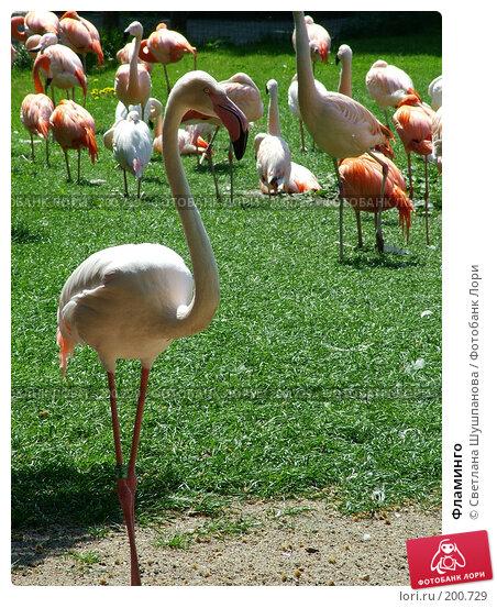 Купить «Фламинго», фото № 200729, снято 9 мая 2006 г. (c) Светлана Шушпанова / Фотобанк Лори