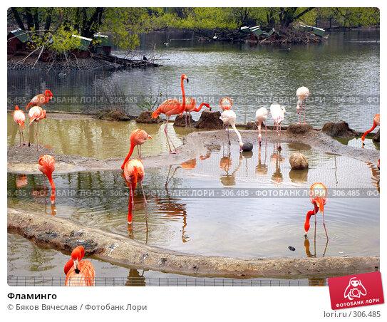 Фламинго, фото № 306485, снято 16 апреля 2008 г. (c) Бяков Вячеслав / Фотобанк Лори