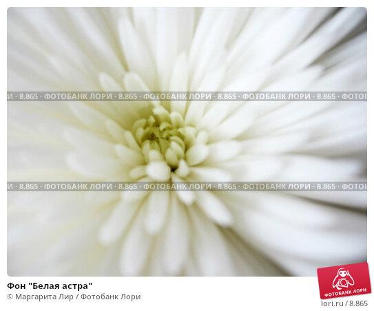 """Фон """"Белая астра"""", фото № 8865, снято 3 сентября 2006 г. (c) Маргарита Лир / Фотобанк Лори"""