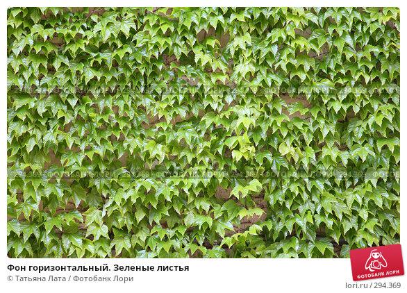 Фон горизонтальный. Зеленые листья, эксклюзивное фото № 294369, снято 26 апреля 2008 г. (c) Татьяна Лата / Фотобанк Лори