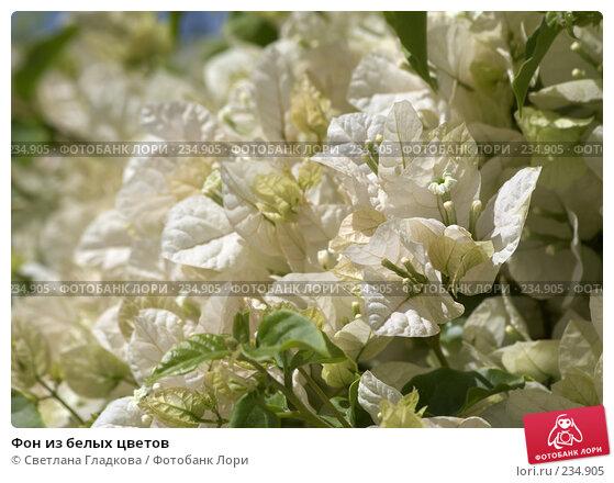 Фон из белых цветов, фото № 234905, снято 25 мая 2017 г. (c) Cветлана Гладкова / Фотобанк Лори