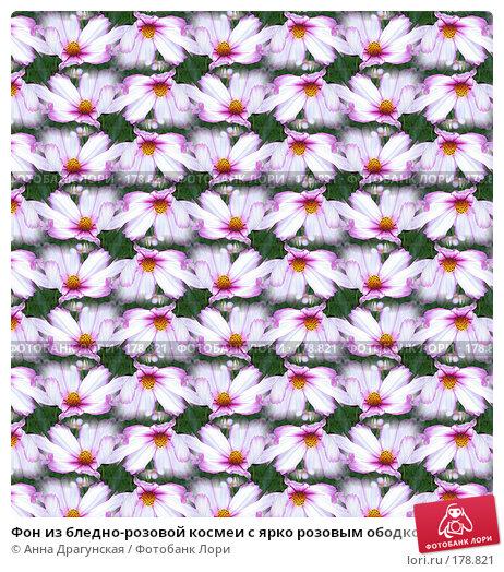 Фон из бледно-розовой космеи с ярко розовым ободком, фото № 178821, снято 23 августа 2007 г. (c) Анна Драгунская / Фотобанк Лори