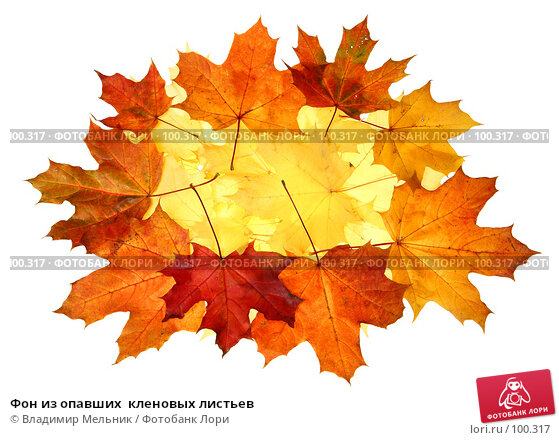 Фон из опавших  кленовых листьев, фото № 100317, снято 29 сентября 2007 г. (c) Владимир Мельник / Фотобанк Лори