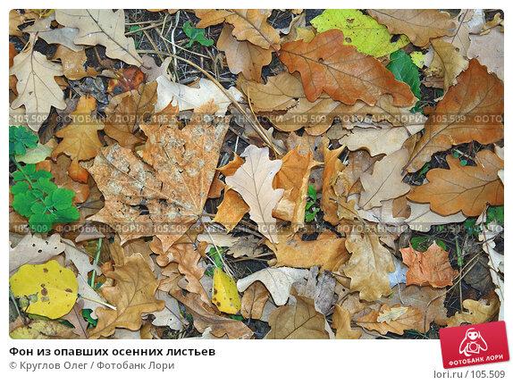 Фон из опавших осенних листьев, фото № 105509, снято 17 октября 2007 г. (c) Круглов Олег / Фотобанк Лори