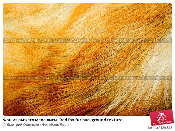 Фон из рыжего меха лисы. Red fox fur background texture, фото № 129813, снято 17 декабря 2006 г. (c) Дмитрий Ощепков / Фотобанк Лори