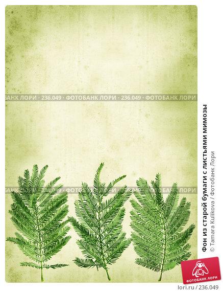 Фон из старой бумаги с листьями мимозы, иллюстрация № 236049 (c) Tamara Kulikova / Фотобанк Лори