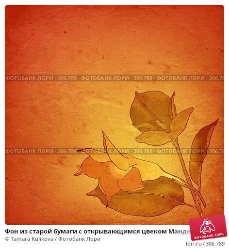 Купить «Фон из старой бумаги с открывающимся цвеком Мандевиллы (Дипладения)», иллюстрация № 306789 (c) Tamara Kulikova / Фотобанк Лори