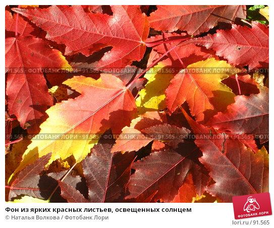 Фон из ярких красных листьев, освещенных солнцем, фото № 91565, снято 2 октября 2007 г. (c) Наталья Волкова / Фотобанк Лори
