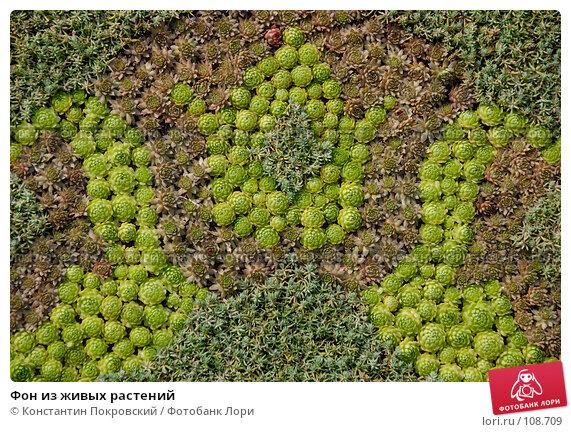 Фон из живых растений, фото № 108709, снято 26 августа 2007 г. (c) Константин Покровский / Фотобанк Лори