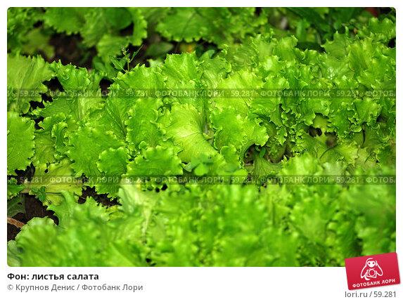 Фон: листья салата, фото № 59281, снято 30 мая 2007 г. (c) Крупнов Денис / Фотобанк Лори