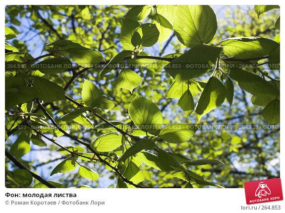 Купить «Фон: молодая листва», фото № 264853, снято 27 апреля 2008 г. (c) Роман Коротаев / Фотобанк Лори