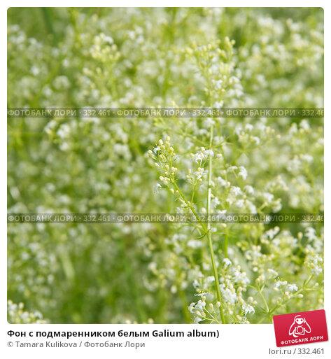Фон с подмаренником белым Galium album), фото № 332461, снято 24 июня 2008 г. (c) Tamara Kulikova / Фотобанк Лори