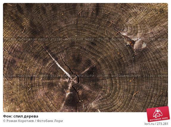 Фон: спил дерева, фото № 273281, снято 24 марта 2007 г. (c) Роман Коротаев / Фотобанк Лори