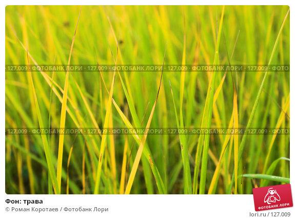 Фон: трава, фото № 127009, снято 20 октября 2007 г. (c) Роман Коротаев / Фотобанк Лори