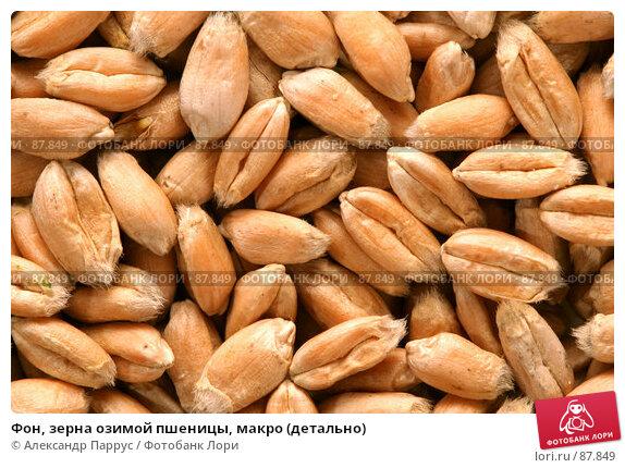 Фон, зерна озимой пшеницы, макро (детально), фото № 87849, снято 18 сентября 2007 г. (c) Александр Паррус / Фотобанк Лори