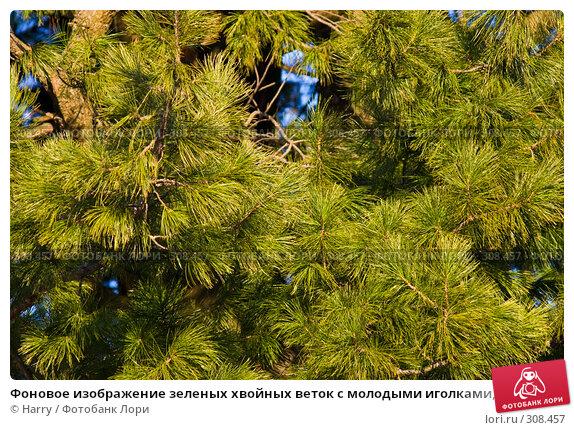 Купить «Фоновое изображение зеленых хвойных веток с молодыми иголками, освещенные закатным светом солнца», фото № 308457, снято 17 апреля 2008 г. (c) Harry / Фотобанк Лори