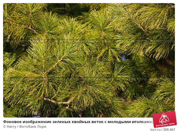 Фоновое изображение зеленых хвойных веток с молодыми иголками, освещенные закатным светом солнца, фото № 308461, снято 17 апреля 2008 г. (c) Harry / Фотобанк Лори