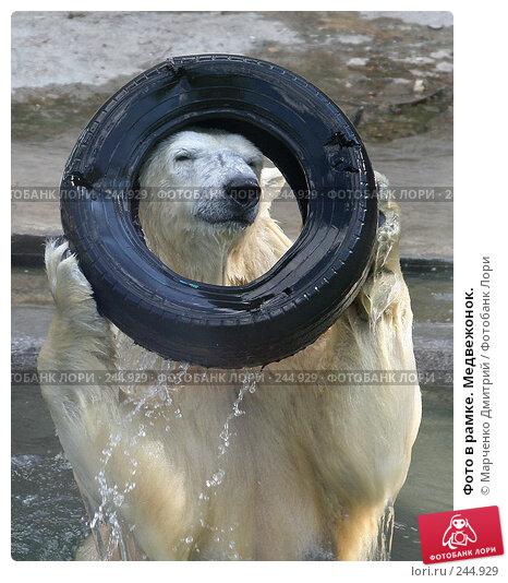 Фото в рамке. Медвежонок., фото № 244929, снято 7 мая 2006 г. (c) Марченко Дмитрий / Фотобанк Лори